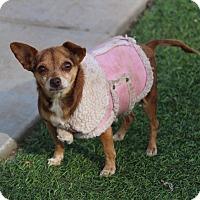 Adopt A Pet :: Sophie Tofu - Creston, CA