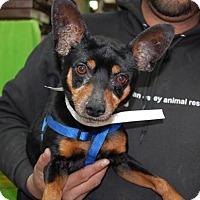 Adopt A Pet :: Tempo - Brooklyn, NY