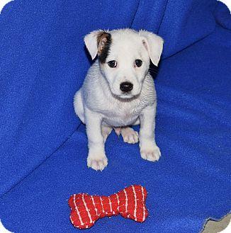Adopt A Dog Milwaukee Wisconsin
