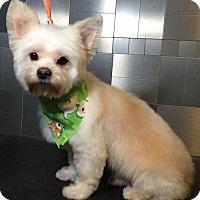Adopt A Pet :: Kentucky - McKinney, TX