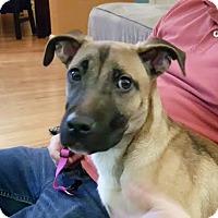 Adopt A Pet :: Sunni-Adopted! - Detroit, MI
