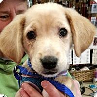 Adopt A Pet :: Juanito-ADOPTION PENDING - Boulder, CO