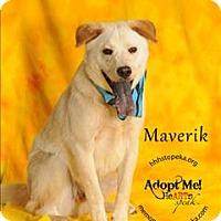 Adopt A Pet :: Maverik - Topeka, KS