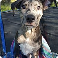 Adopt A Pet :: Jolie - Dayton, OH