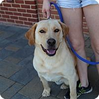 Adopt A Pet :: Bronco - Manassas, VA