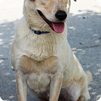 Adopt A Pet :: Cheddar - Christiana, TN