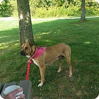 Adopt A Pet :: Ellie - Oakland, MI