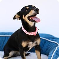 Adopt A Pet :: Paris - Auburn, CA