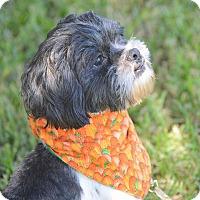 Adopt A Pet :: Kingston - San Leon, TX