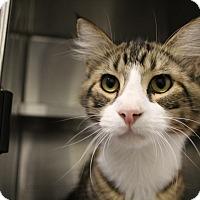 Adopt A Pet :: Swayze - Sarasota, FL