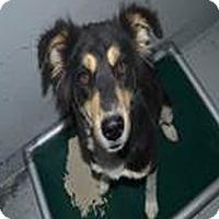 Adopt A Pet :: bea - Midvale, UT