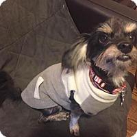 Adopt A Pet :: Elvin - Houston, TX