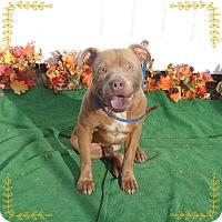 Adopt A Pet :: OAKIE - Marietta, GA