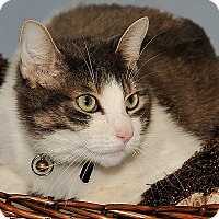 Adopt A Pet :: Leo - Gatineau, QC
