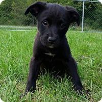 Adopt A Pet :: Morado - Columbia, MD