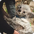 Adopt A Pet :: Oscar