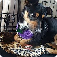Adopt A Pet :: Dominic - Valencia, CA