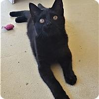 Adopt A Pet :: Miranda - Umatilla, FL