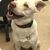 Adopt A Pet :: Tarzan - Savannah, GA