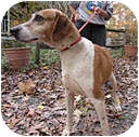 Hound (Unknown Type) Mix Dog for adoption in Chesterfield, Virginia - Zoe