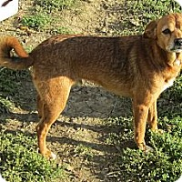 Adopt A Pet :: Branley - Harrodsburg, KY