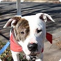 Adopt A Pet :: Joseph - Justin, TX
