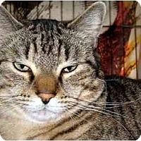 Adopt A Pet :: Bongo - Medway, MA