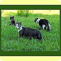 Adopt A Pet :: Mewen - Midway, GA