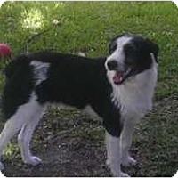 Adopt A Pet :: marti - Miami, FL