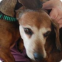 Adopt A Pet :: Jumbo - Ogden, UT