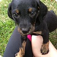 Adopt A Pet :: JUNO - Inglewood, CA