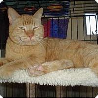 Adopt A Pet :: Morris - Scottsdale, AZ