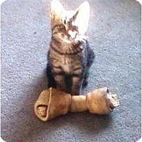 Adopt A Pet :: Pixie - Kirkwood, DE