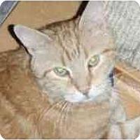 Adopt A Pet :: Colby - Pasadena, CA