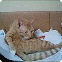 Adopt A Pet :: Miss Daisy - San Ramon, CA