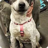 Adopt A Pet :: Bailey - Alexis, NC