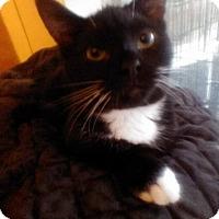 Adopt A Pet :: Thomas Tux - Fairborn, OH