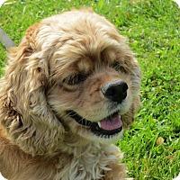 Adopt A Pet :: Bonnie 3yr Adopted - Mentor, OH