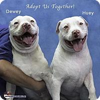 Adopt A Pet :: Huey and Dewey - Acton, CA