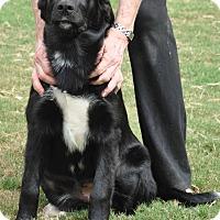 Adopt A Pet :: Delilah - Byhalia, MS