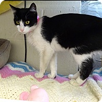 Adopt A Pet :: Rosie 'Social Butterfly' - Mt Vernon, NY