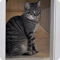 Adopt A Pet :: Abe - Medina, OH