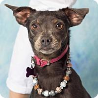 Adopt A Pet :: Kiana - Gilbert, AZ