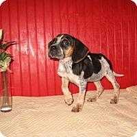 Adopt A Pet :: Pepper - KANNAPOLIS, NC