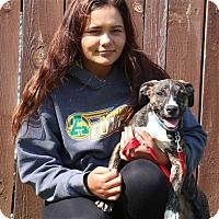 Adopt A Pet :: Zelda - Elyria, OH