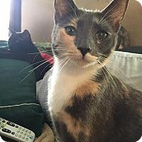 Adopt A Pet :: Mocha Caramel - Vass, NC