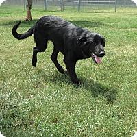 Adopt A Pet :: Dennis - Harmony, Glocester, RI