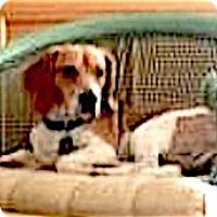 Adopt A Pet :: Griffin - Houston, TX