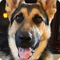 Adopt A Pet :: Kyleigh - Federal Way, WA
