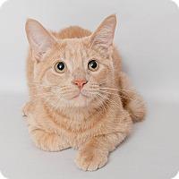 Adopt A Pet :: Manny - Wyandotte, MI